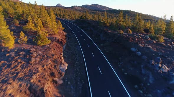 Thumbnail for Pine Forest Road at Sunset 3