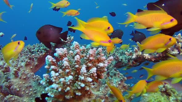 Cover Image for Colorful Tropical Coral Reef