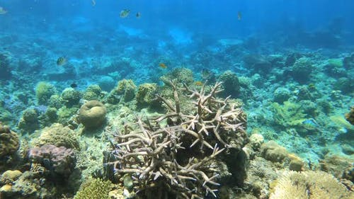 Colorful Tropical Fish Swarming Around Hard and Soft Corals on a Tropical Reef