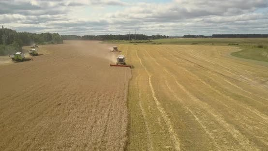 Thumbnail for Aerial Panorama Harvesting of Wheat with Reaper Threshers