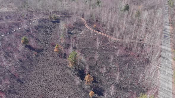Thumbnail for Aerial top view of burnt forest. Forest fires. Danger. Environmental pollution.