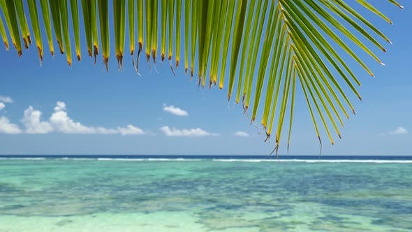 Palm Leaf on Tropical Beach Peaceful Swaying in Breeze Against Ocean Turquoise Lagoon with Reef