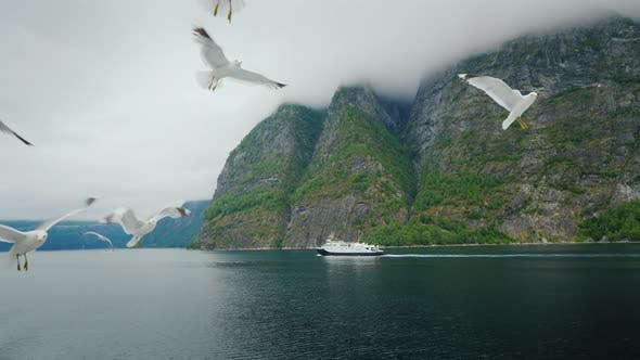 Cover Image for Landscapes of Norway - a Picturesque Fjord, in the Distance a Ship Sails, in the Foreground Gulls