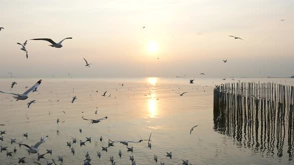 White Seagulls Flying Over The Sea Under Sunset