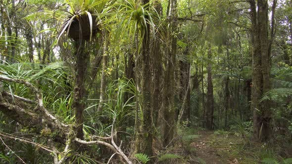 Thumbnail for Fresh Green Primeval Forest in New Zealand Wild Nature