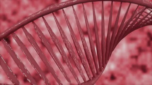 DNA Is Made Up of Scattered Pieces
