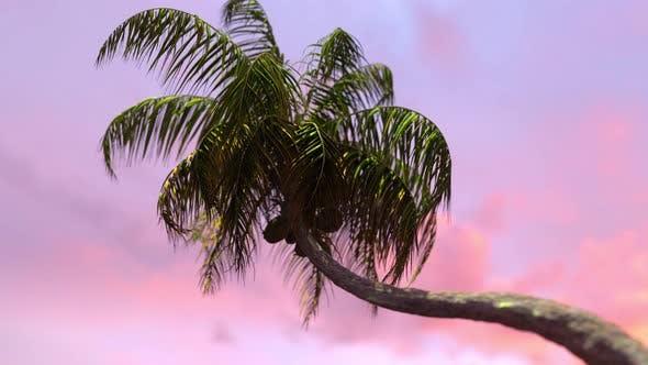 Thumbnail for Sonnenuntergang Kokospalme