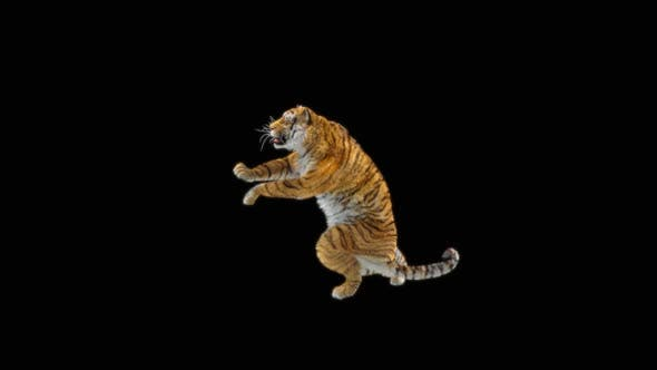 Thumbnail for 76 Tiger Standing Magic Attack HD