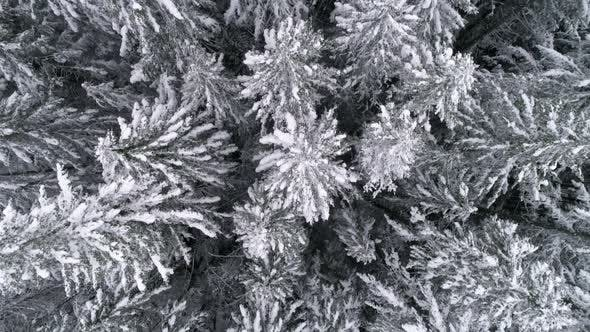 Thumbnail for Slow Motion Aerial Of Winter Season Snow Flakes Falling On Frozen Tree Tops In Mountain Forest
