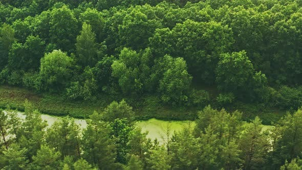 Aerial View Green Forest Woods And Small Marsh Bog Swamp Pond Landscape In Summer Day