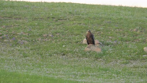 Wild Eagle Perched Stone in Plateau
