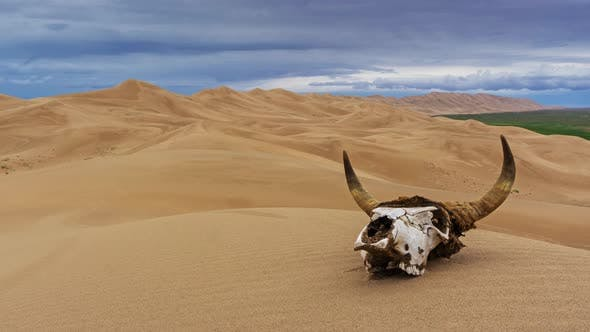 Thumbnail for Bull Skull in Sand Desert at Sunset Timelapse