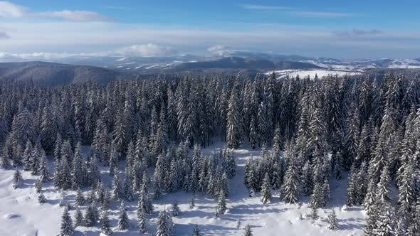 Thumbnail for Flying Above Snow Covered Winter Forest and Mountains