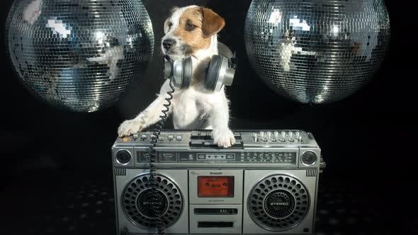 Dog Ghetto