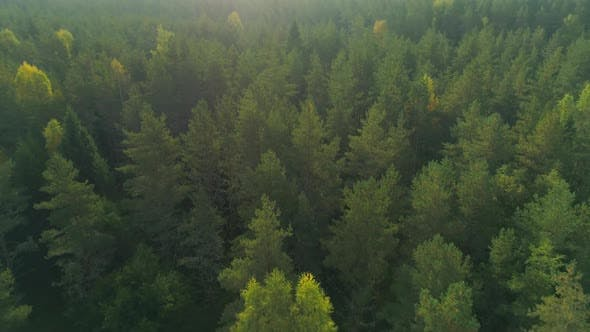 Thumbnail for Flying Over Wild Forest In The Morning