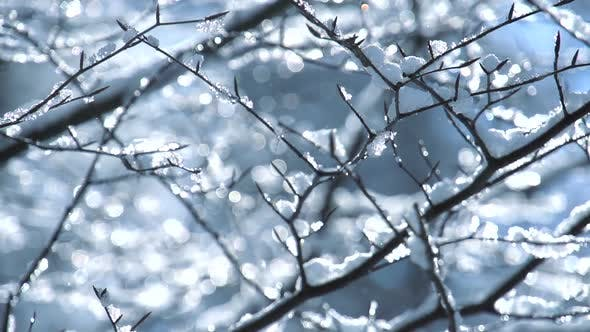 Thumbnail for Forest Trees Snow Falling Weather Change Scenery