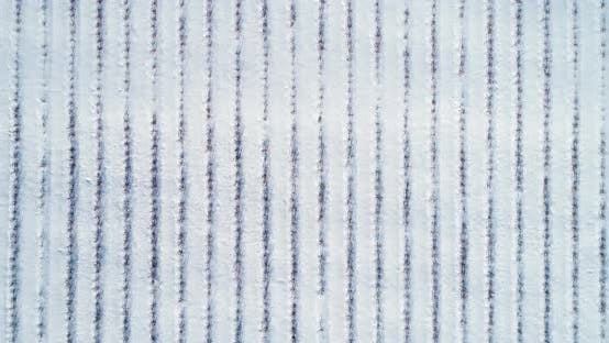 Thumbnail for Blueberry Field in Winter