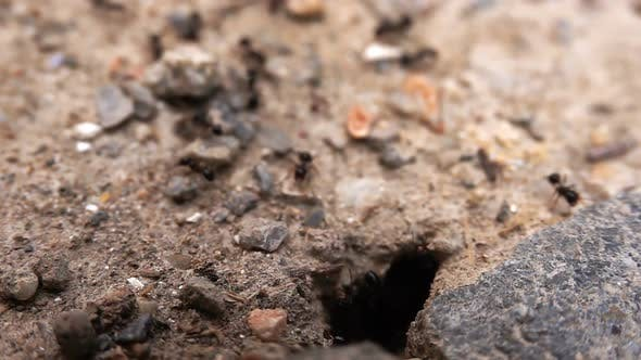 Thumbnail for Insect Ants On Soil