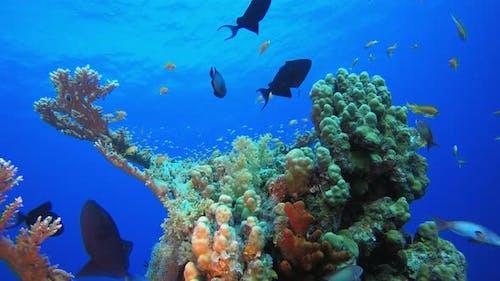 Coral Reef Undersea
