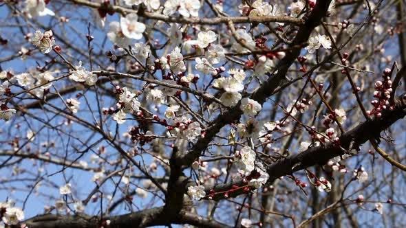 Thumbnail for Fresh Spring Background