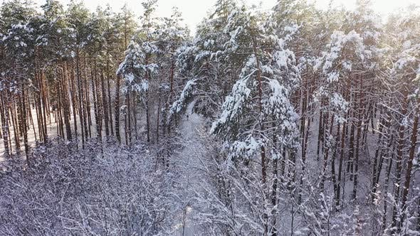 The Winter Forest Field in Sunny Weather Field