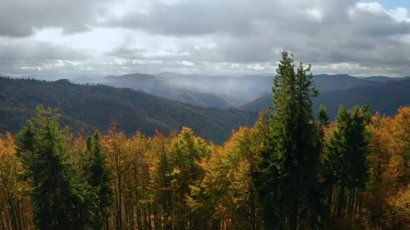 Golden Herbst Drohne Ansicht von Wald Landschaft mit gelben Bäumen von oben