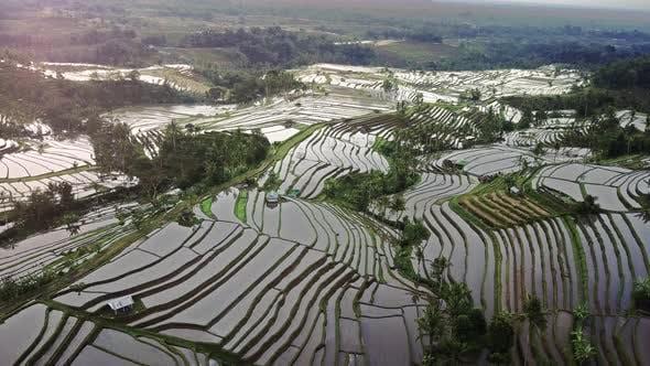 Thumbnail for Bali Rice Terrace 003