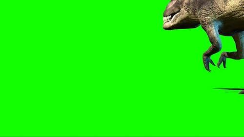 Giganotosaurus Dinosaur Walking On Green Screen 91