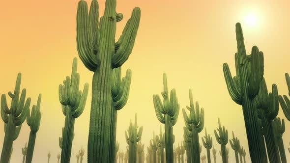 Thumbnail for Cactus Daytime 4k