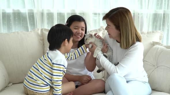 Asiatische Familie spielt mit britischem Kätzchen im Wohnzimmer