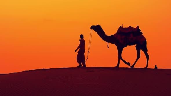 Thumbnail for Cameleers, Camel Drivers at Sunset. Thar Desert on Sunset Jaisalmer, Rajasthan, India.