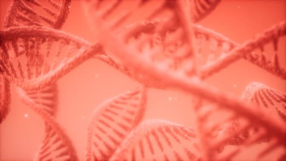Thumbnail for Structure of the DNA Double Helix Animation