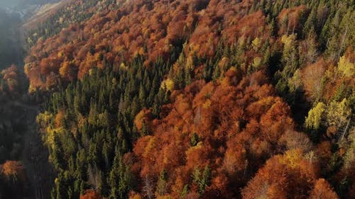 Aerial view of beautiful autumn forest 4k