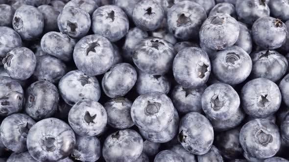 Freshly Picked Blueberries Fruit Background.