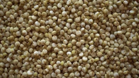 Cover Image for Rotation Macro Quinoa Seeds