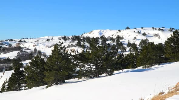 Thumbnail for Pine Forest In the Snow-Covered Plateau
