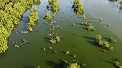 Wetland of natural habitat for birds