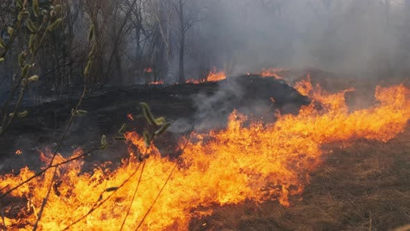 Wildfire in Spring Forest Burning Dry Grass Trees Bushes Flames and Smoke