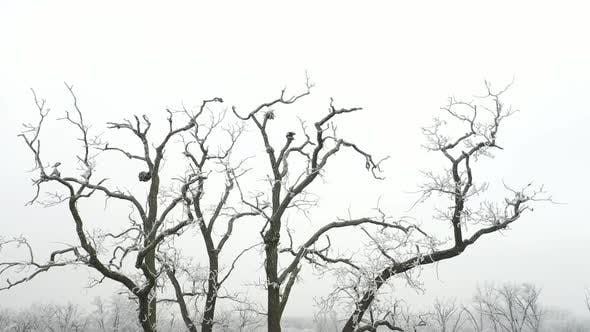 Thumbnail for Branches in Winter