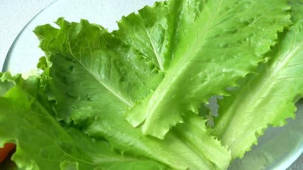 Thumbnail for Lettuce Leaves