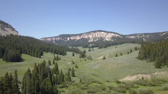 Thumbnail for Meadow Forest and Mountain Habitat Landscape in Bighorn Mountains in Summer