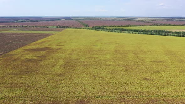 Thumbnail for Agricultural fields aerial view
