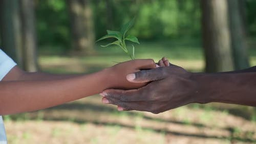 Saving Nature Young African Female Passes a Plant to a Man a Closeup on Her Hands a Metaphorical