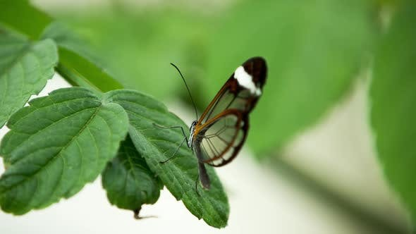 Thumbnail for Butterfly World 08