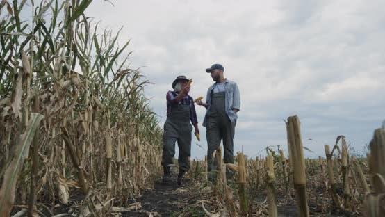 Thumbnail for Senior Farmer Showing Corn Field To Successor