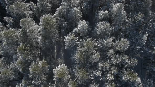 Thumbnail for Aerial pan over forest dusted with snow