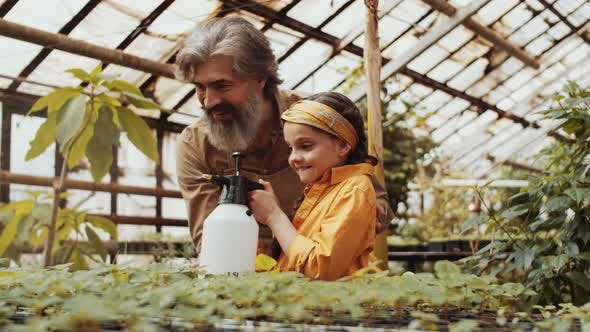 Thumbnail for Happy Granddad and Little Girl Spraying Plants in Greenhouse