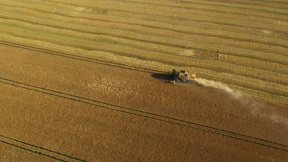 Aerial View Combine Harvesting Wheat