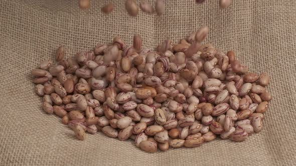 Red Beans Legumes Organic Harvest Agriculture