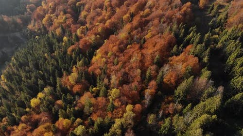 Epic aerial view of mixed spruce and deciduous green and orange autumn forest.